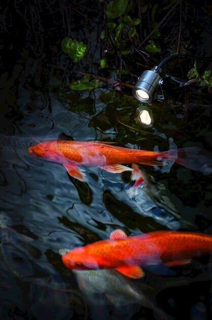 Stainless steel Outdoor floodlight / underwater lamp KOZI Z by BEL-LIGHTING