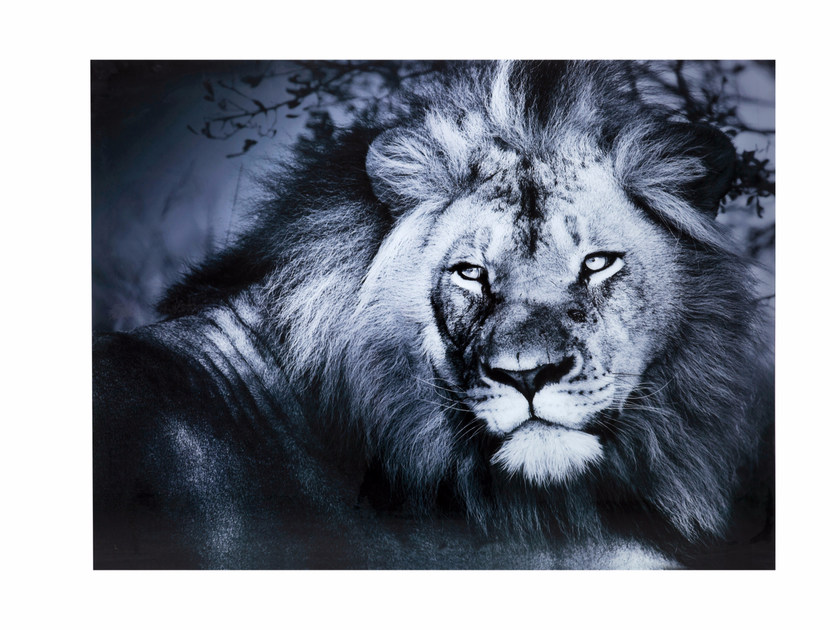 Photographic print / Print on glass LION | Print on glass by KARE-DESIGN
