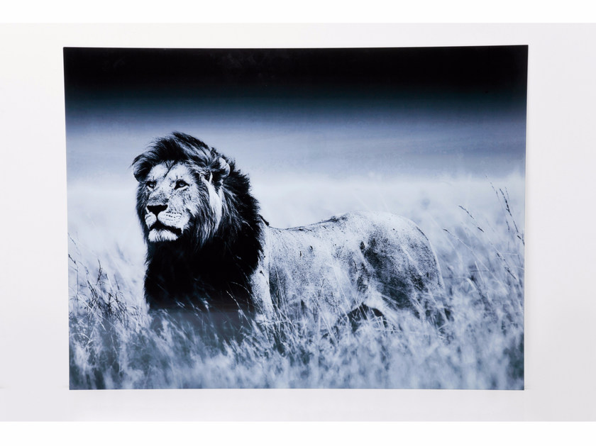 Photographic print / Print on glass LION by KARE-DESIGN