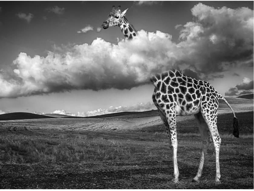 Stampa fotografica GIRAFFA SOPRA LE NUVOLE by Artphotolimited