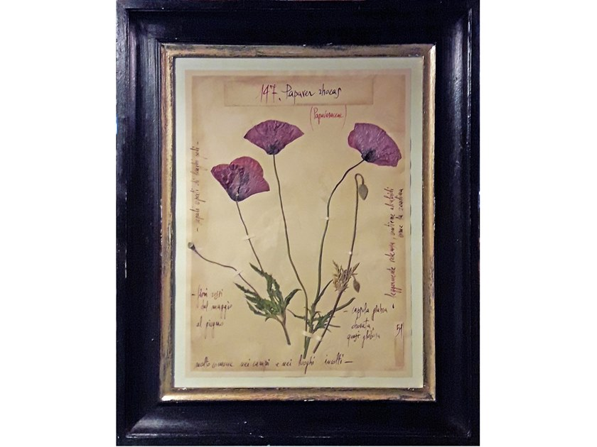Decorative panel PAPAVER RHOEAS by OFFICINA NATURALIS