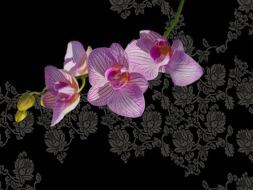 Wallpaper with floral pattern JUNGLELAND by Wall&decò