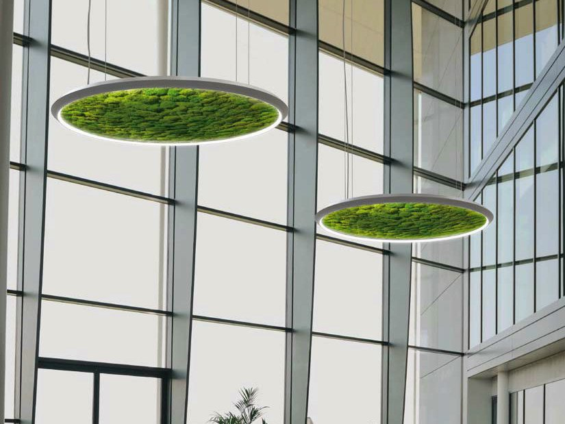 Dried moss LED pendant lamp LUCE VERDE SLIM by Sattler