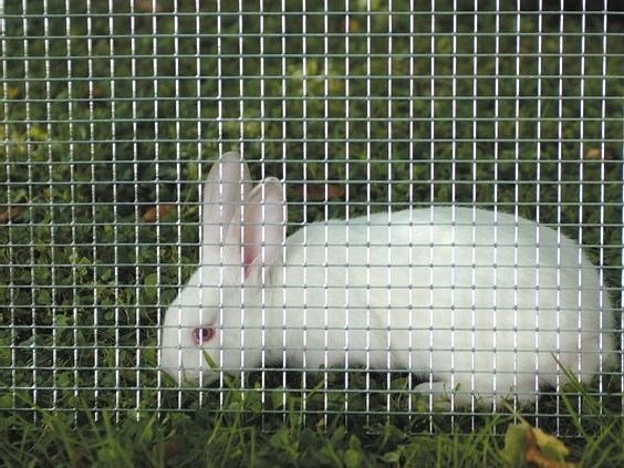 Square galvanized wire mesh fence for animal cages QUADRAMET by TENAX