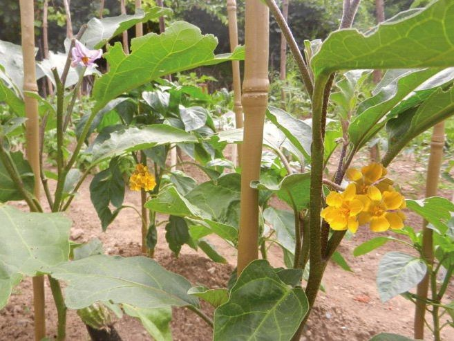 Vertical gardening trellis BAMBOO UP by TENAX