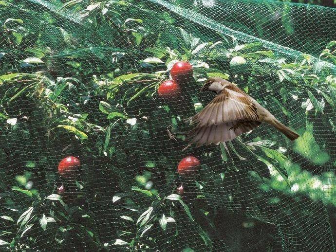 Square mesh bird netting ORTOFLEX by TENAX