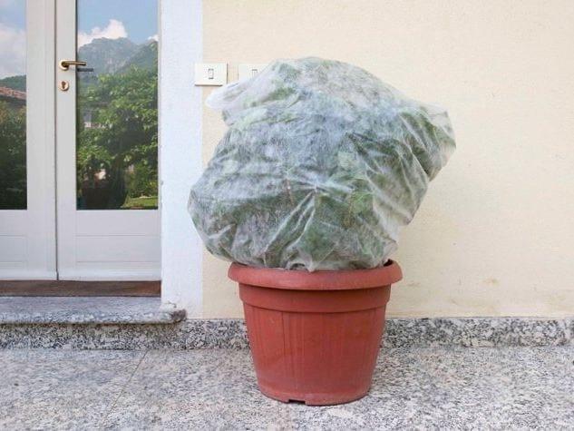 Protective fleece for plant protection SACCOCLIMA by TENAX