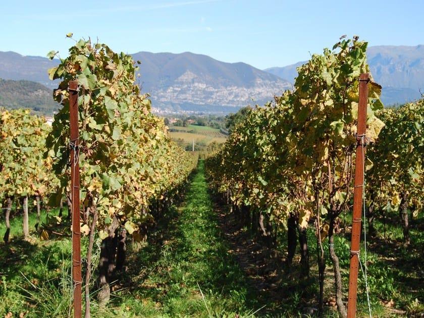 Corten™ vertical gardening trellis ALPI by Ferro Bulloni