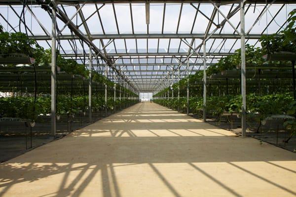 Supporto per impianto fotovoltaico Serre fotovoltaiche by CMM