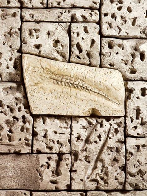 fossile_ideal_tix