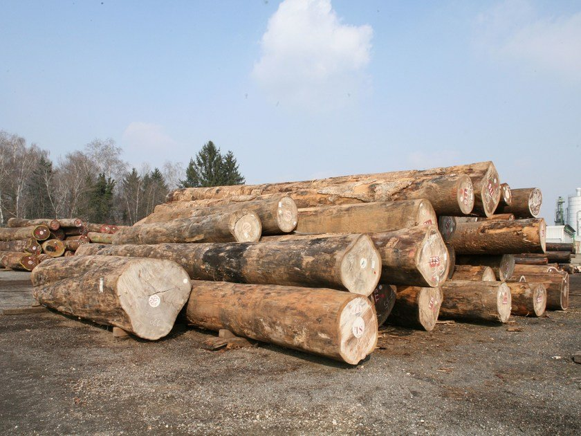 Logs, lumber Logs and timber by BELLOTTI