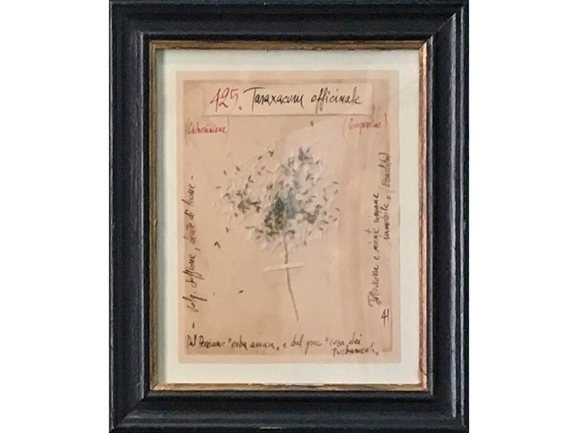 Herbarium with natural flowers and handicraft wooden frame TARAXACUM by OFFICINA NATURALIS