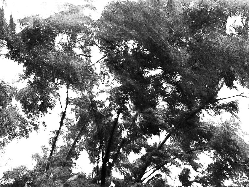 Wallpaper TREE by Wallpepper