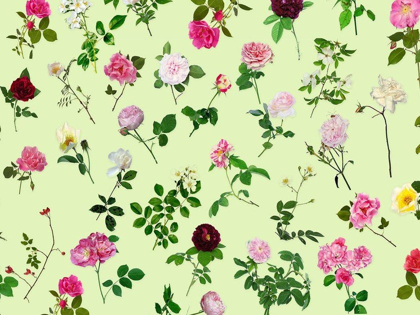 Wallpaper with floral pattern ROSE IS A ROSE by Wallpepper