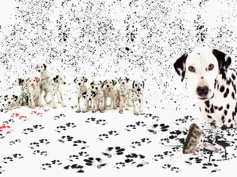For all ages wallpaper, PVC free, eco, washable DALMATA PASTICCIONE by Wallpepper