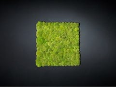 Quadro vegetalePOLEMOSS - VGNEWTREND
