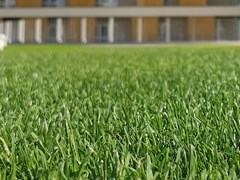 Sistema ibrido erba naturale e sintetica per ambito urbanoROOFINGREEN HYBRID - ROOFINGREEN