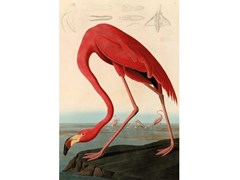 Stampa artistica in pannello di alluminioAMERICAN RED FLAMINGO - MONDIART INTERNATIONAL