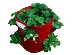 Fioriera in tessuto STRAWBERRY PLANTER - BloemBagz