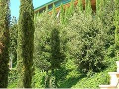 Giardino pensile intensivo con alberi di I grandezzaPERLIROOF intensivo alberi I grandezza - PERLITE ITALIANA