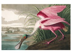 Stampa artistica in PET riciclatoROSEATE SPOONBILL - BIRD - MONDIART INTERNATIONAL