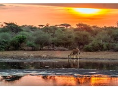 Stampa fotograficaTRAMONTO IN AFRICA - ARTPHOTOLIMITED