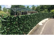 DIVY 3D PLUS PHOTINIA