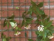 Maille pour soutenir les plantes grimpantes COROLLA by TENAX