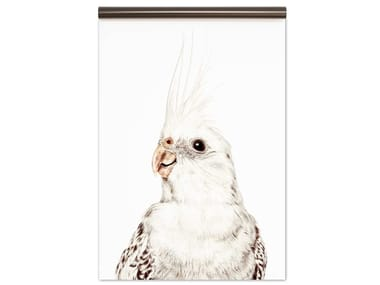 Magnetic wallpaper PARAKEET | Magnetic wallpaper