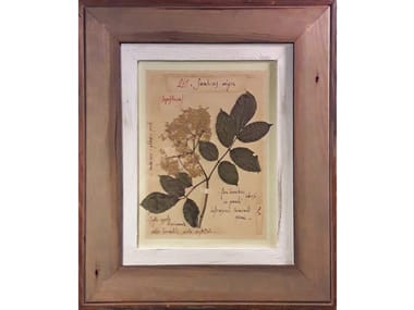 Herbarium with natural flowers and handicraft wooden frame SAMBUCUS NIGRA