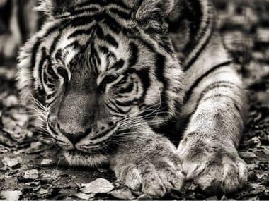 Stampa fotografica LA TIGRE