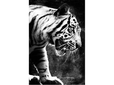 Stampa fotografica TIGRE