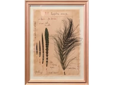 Herbarium with natural flowers and handicraft wooden frame EQUISETUM ARVENSE