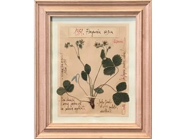 Herbarium with natural flowers and handicraft wooden frame FRAGARIA VESCA