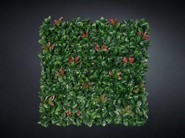 Vegetal frame PHOTINIA