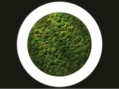 Dried moss LED wall lamp LUCE VERDE ANELLO | Wall lamp
