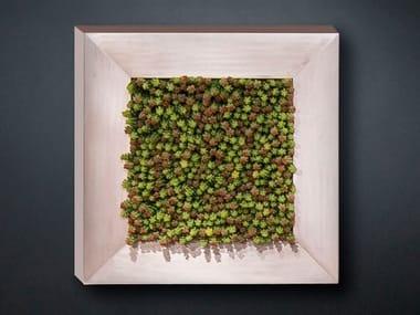 Vegetal frame SEDUM