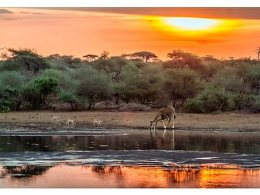 Stampa fotografica TRAMONTO IN AFRICA