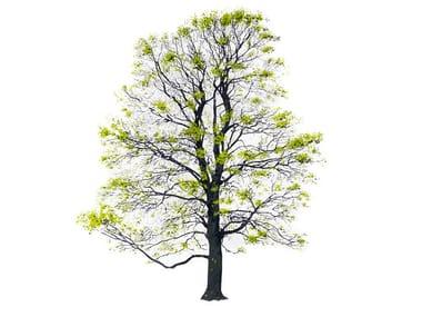 Quadro TREE SPRING